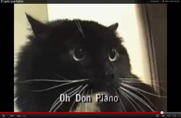 Gatos parlantes YouTube