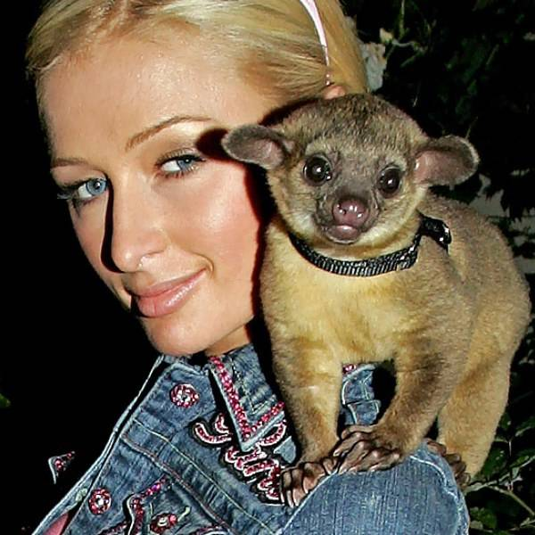 Paris Hilton y su Kinkajú