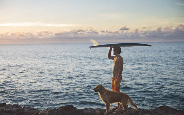 Perro paseando en la playa