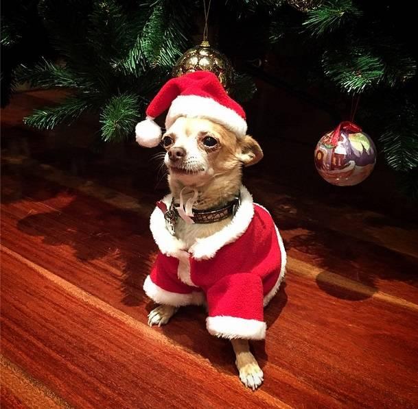 Navidad-Mascota-de-Paula- Echevarría-Vanidad