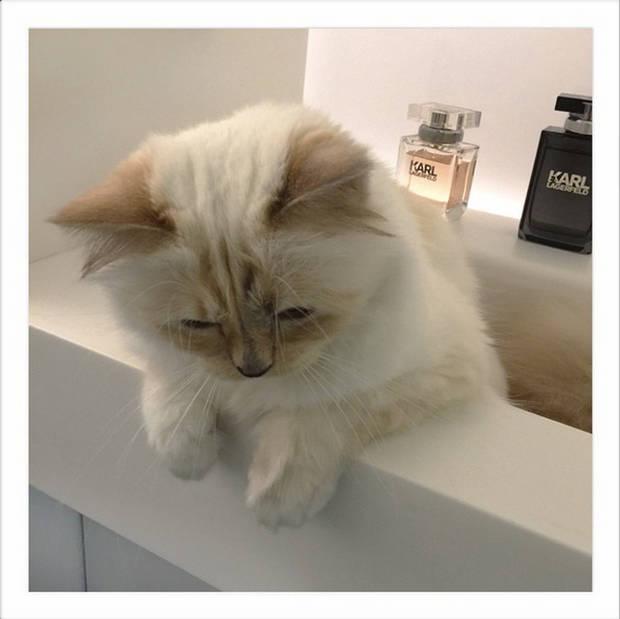 Mascotas_Moda_Lagerfeld_Vanidad