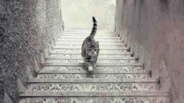 ¿EL gato sube o baja? Tómate unos minutos para pensarlo, es una decisión muy importante