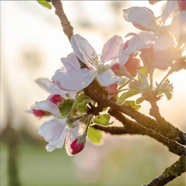 flower power manzano - vanidad - 4