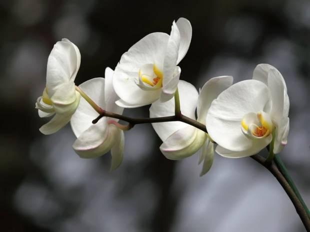 flower power orquidea vanidad