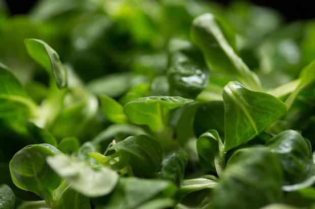 10 super comidas que mejoran tu vida canonigos