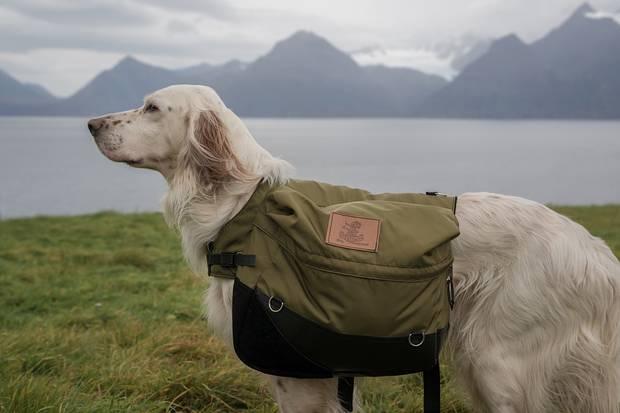 vacaciones-con-mascotas-escapadas-dog-friendly-escapadas-caninas
