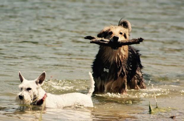 vacaciones-con-mascotas-escapadas-dog-friendly-playa-vacaciones-campus-perruno-madrid