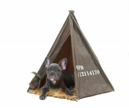 regalos-mascotas-7