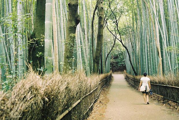 Lugares curiosos Bosque de Bambú, Kyoto