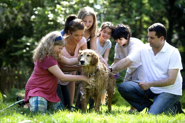 Perro familia