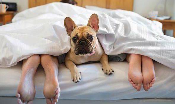 perro hoteles dog friendly