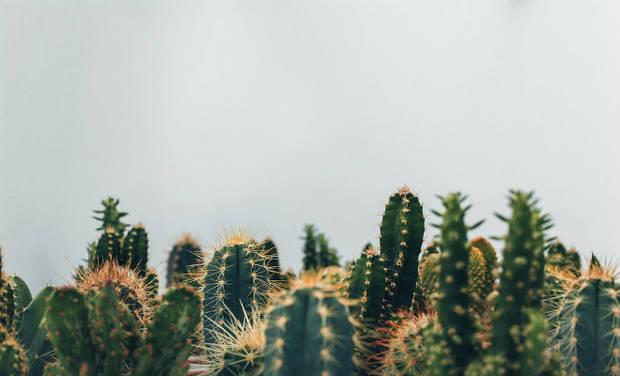 Plantas que no necesitan mimos