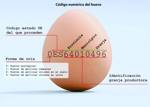tortilla huevos