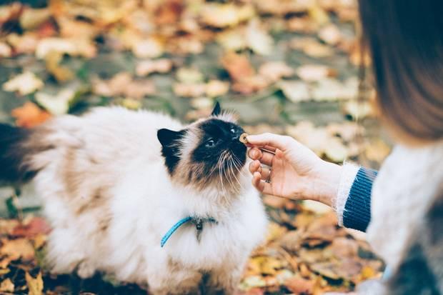 mascota_regalar_gato